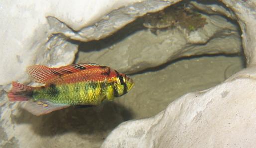aquaterrarium (34ced) Belly3